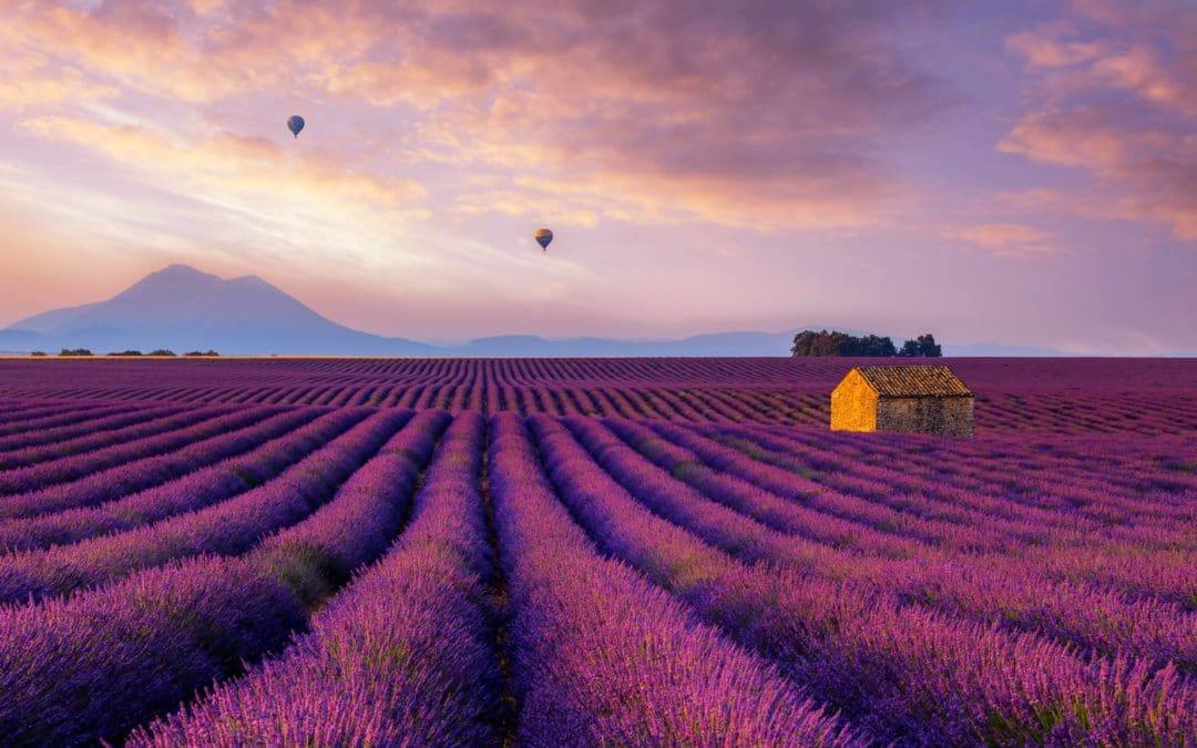 Where is Provence ?