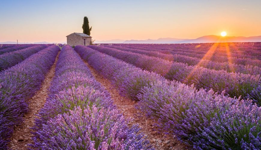 private sightseeing tours valensole lavender fields